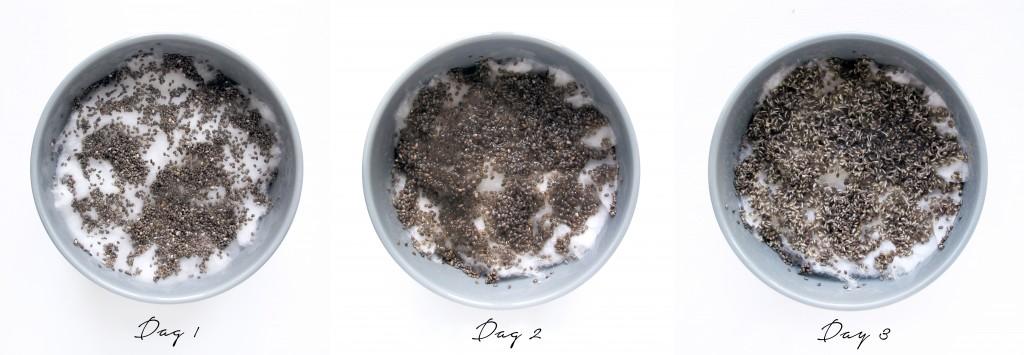 chia karse gror stærkt og du kan på få dage have lækkert grønt til maden